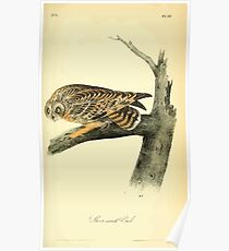 James Audubon Vector Rebuild - The Birds of America - From Drawings Made in the United States and Their Territories V 1-7 1840 - Short Eared Owl Poster