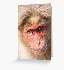 Bonnet Macaque Portrait Greeting Card