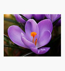 Welcome Spring Photographic Print