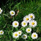 In my Garden by dougie1