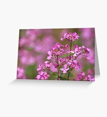 Spring Pink Greeting Card