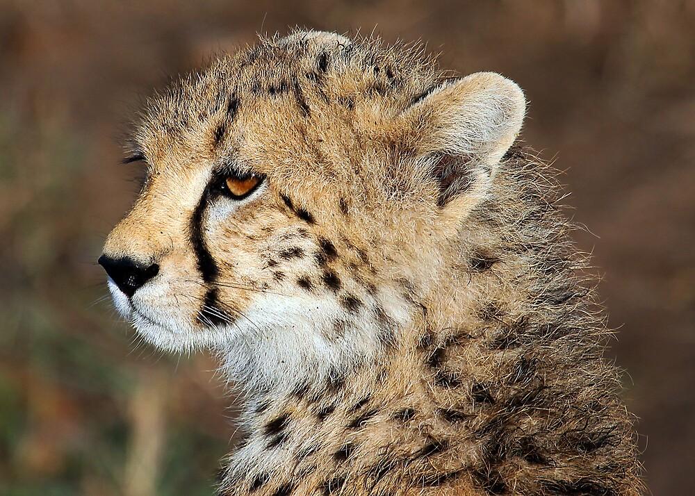 Quot Cheetah Cub Kenya Quot By Michael Sheridan Redbubble