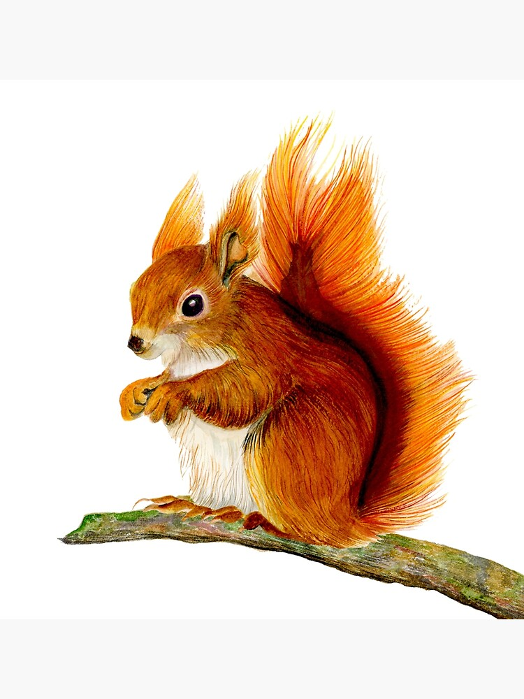 Red Squirrel Animal Watercolor Painting Wildlife Artwork by alison777