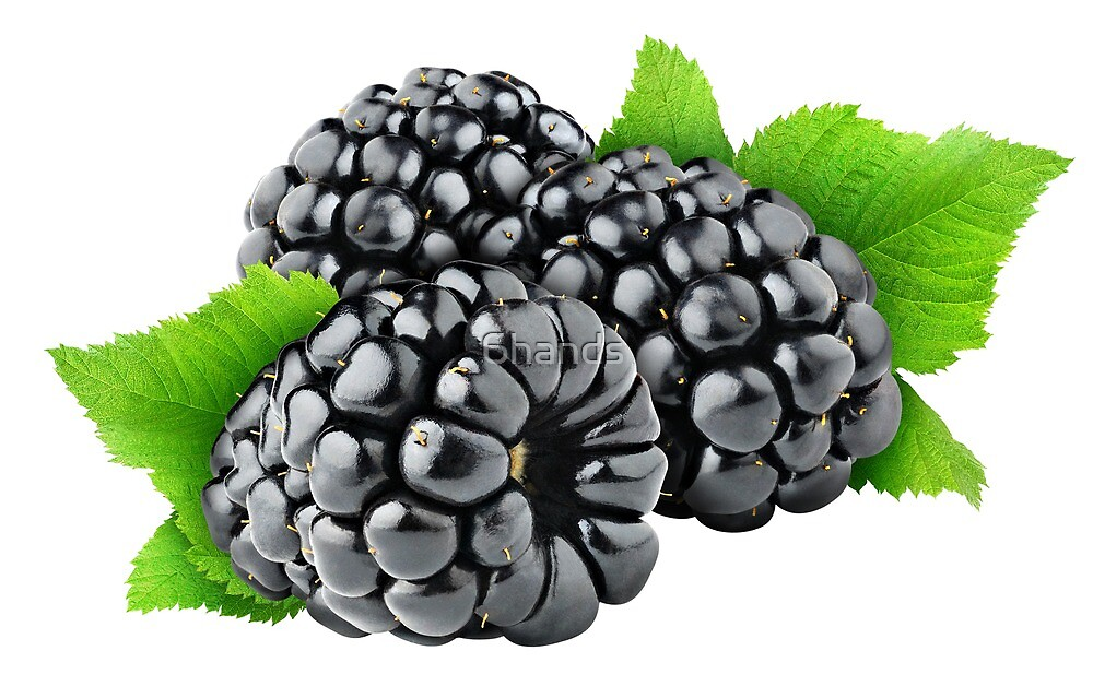 Three blackberries with leaves by 6hands