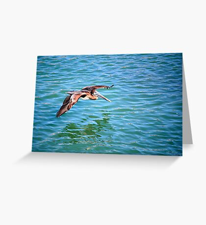 A Pelican in flight Greeting Card