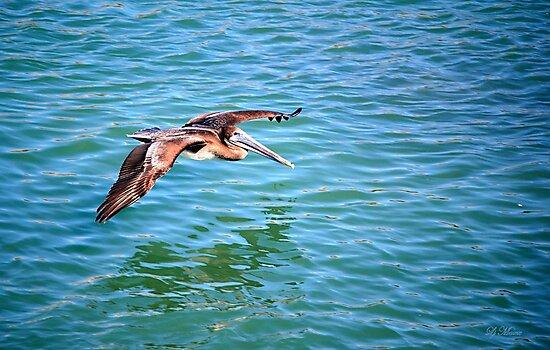 A Pelican in flight by LjMaxx