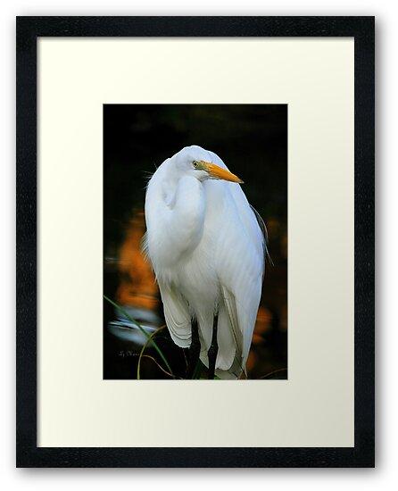 White Heron by LjMaxx