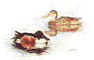 Mallards in Still Water by Kate Eller
