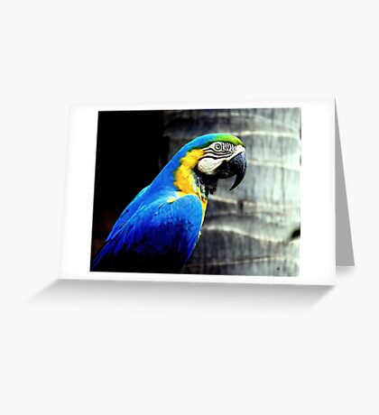 Profile of a Blue & Gold Macaw Greeting Card