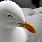 Gull by Photography  by Mathilde