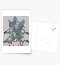 Group of Pigeons Postcards