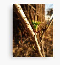 Green Thorn Canvas Print
