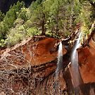 Spring Falls by Barbara Burkhardt
