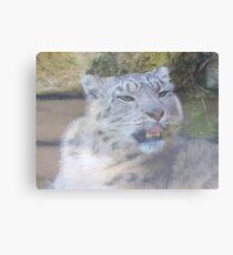 Snow Leopard Portrait (Photo Cezanne Style) Canvas Print