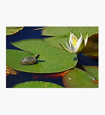 Baby Turtle and Water Lilly Photographic Print