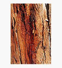 'Coloured bark' Photographic Print