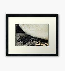 Penguin feet Framed Print