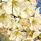 Shadow Blossom 3275 by Candy Paull