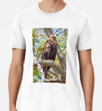 Wedge Tail Eagle in a Kurrajong Tree - Hill End, NSW Premium T-Shirt