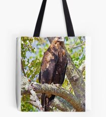 Wedge Tail Eagle in a Kurrajong Tree - Hill End, NSW Tote Bag