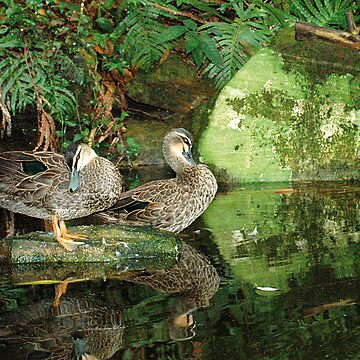 Two ducks preening by ant1design