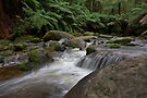 Dance of the Silken White - Toorongo River by Jim Worrall