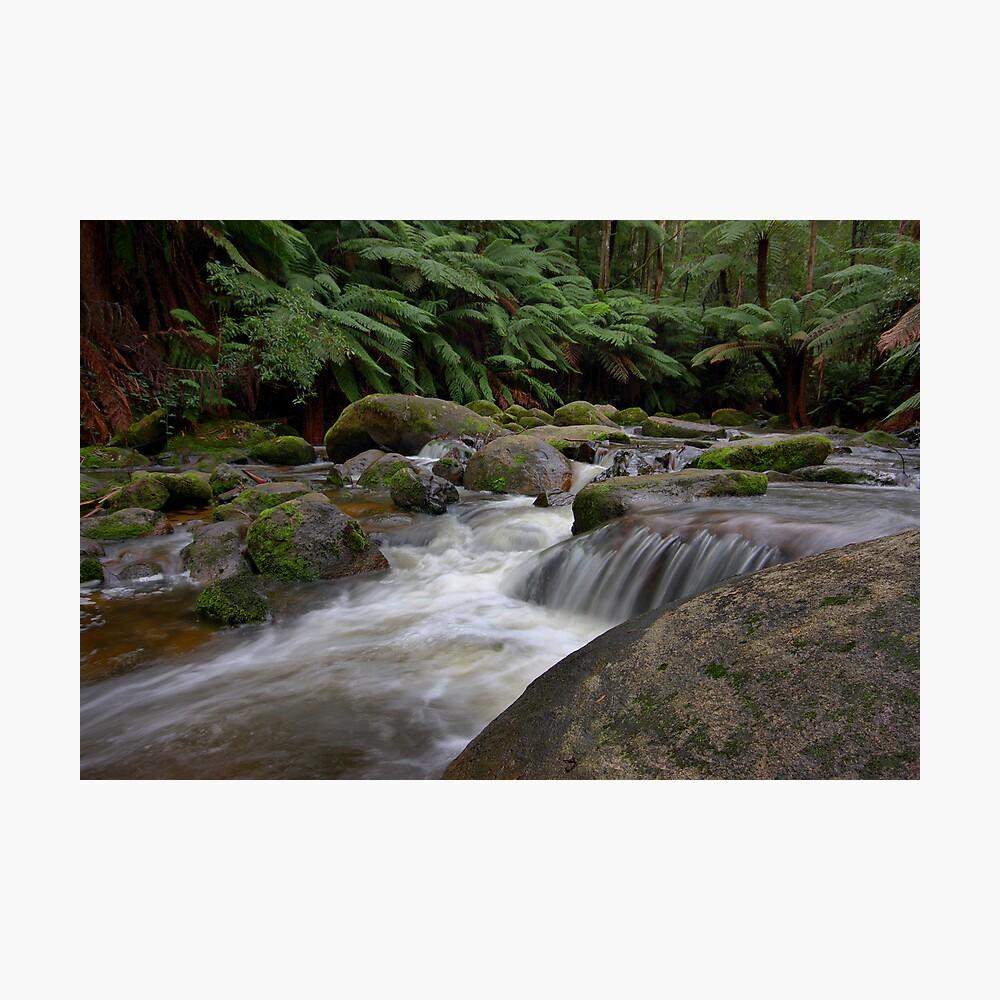 Dance of the Silken White - Toorongo River Photographic Print