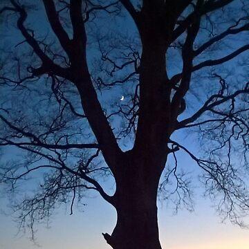 Twilight Tree by MalcolmKirk