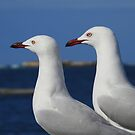 Double Gull by adbetron