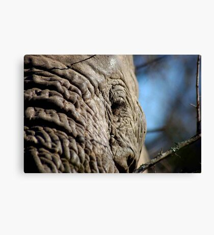 YEARS OF TATTERING Canvas Print