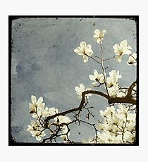A bit of Spring #2 Photographic Print