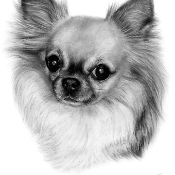 Chihuahua drawing by Danguole