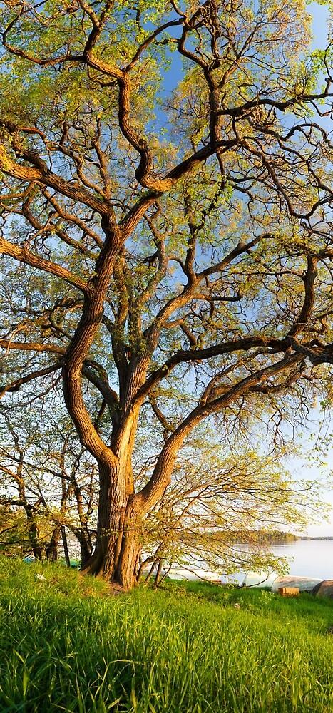 Vertikales Panorama des großen Baums von Juhani Viitanen
