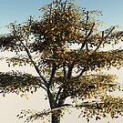 Walnut Tree by dmark3