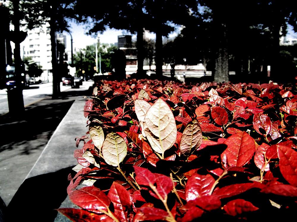 Red by Aiyana