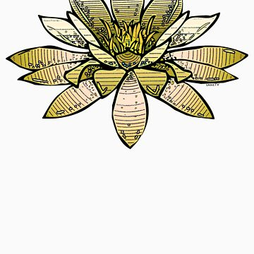 Yellow waterlily by saneTV