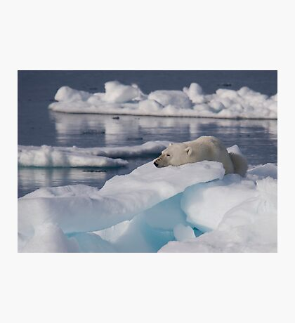 An Ice Rest Photographic Print