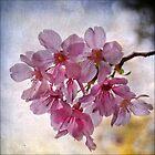 Sakura Dreams by Lydia Marano