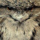 Tawny Frogmouth by Didi Bingham