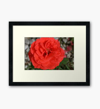 DRENCHED BEAUTY Framed Print
