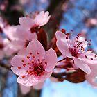 Blossum Song by Bellavista2