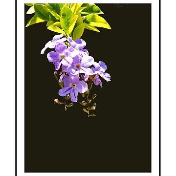 Flower Study in Purple by waldomalan