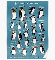 Pinguine der Welt Poster