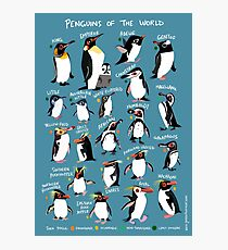 Penguins of the World Photographic Print
