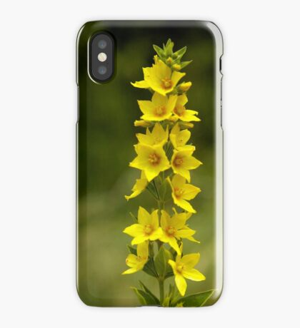 Dotted Yellow Loostrife, Muckross Head, Donegal iPhone Case
