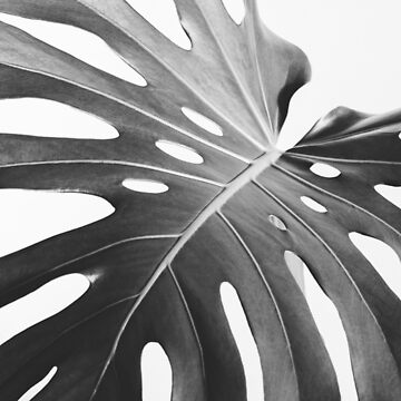 Monstera palm leave by Edalin