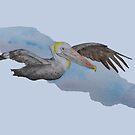 Brown Pelican by pokegirl93