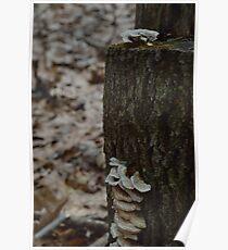 Mushroom - 3 Poster