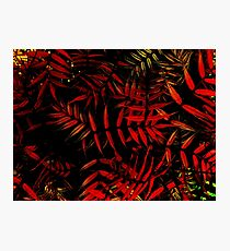 Red Foliage Photographic Print