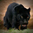 Black Jag by kkgivens